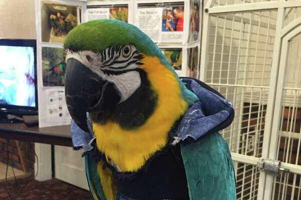 Bird lovers from around the state and beyond are invited to the annual Feather Fest in Middletown.