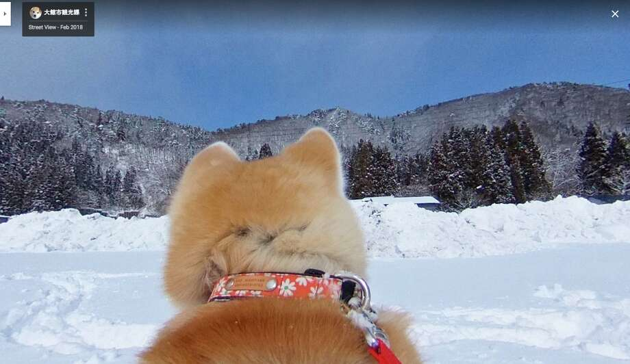 Dogs Eye View Google Now Offers Pup View In Maps San