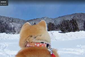 Akita dogs take Google Maps users through Odate in northern Japan, using 3D cameras.