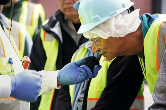 Tour guide and Material Testing Aid Jonathan Smith encourage visitors to sniff non-stinky bio solid ball at the San Francisco Southeast Treatment sewage plant in San Francisco, Calif., Saturday April 25, 2015.
