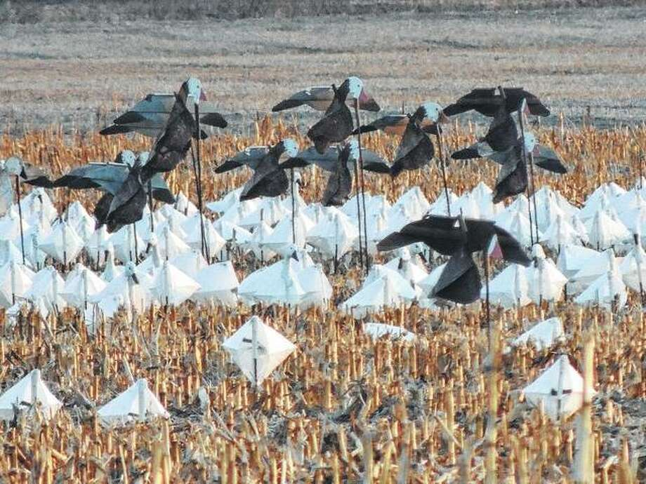 Fake birds fill a field along a Greene County road. Farmers will use decoys to make it appear the area is crowded and help keep real birds away.