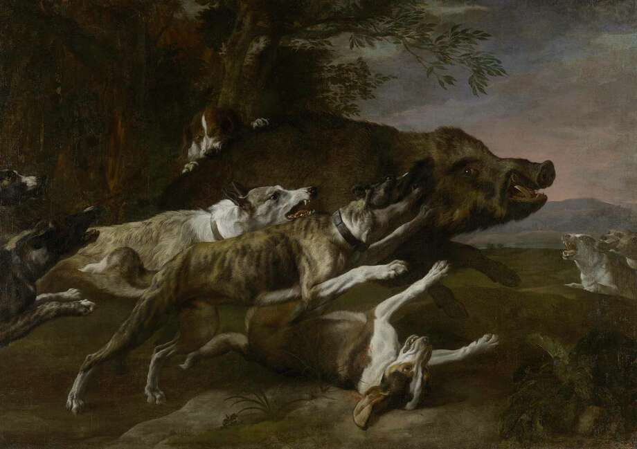 "Pieter Boel's ""Hounds bringing down a Boar,"" mid-17th century, oil on canvas, the Museum of Fine Arts, Houston, Museum purchase funded by Frank Hevrdejs and Gary Petersen in honor of Alfred C. Glassell, Jr. at ""One Great Night in November, 2013."" Photo: Matthew Golden"