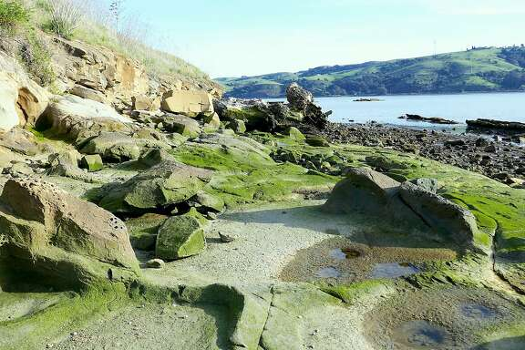 A walk at Benicia State Recreation Area leads to Glen Cove for views of Carquinez Strait and a prize find of ancient grinding mortars in the rocks along the shore