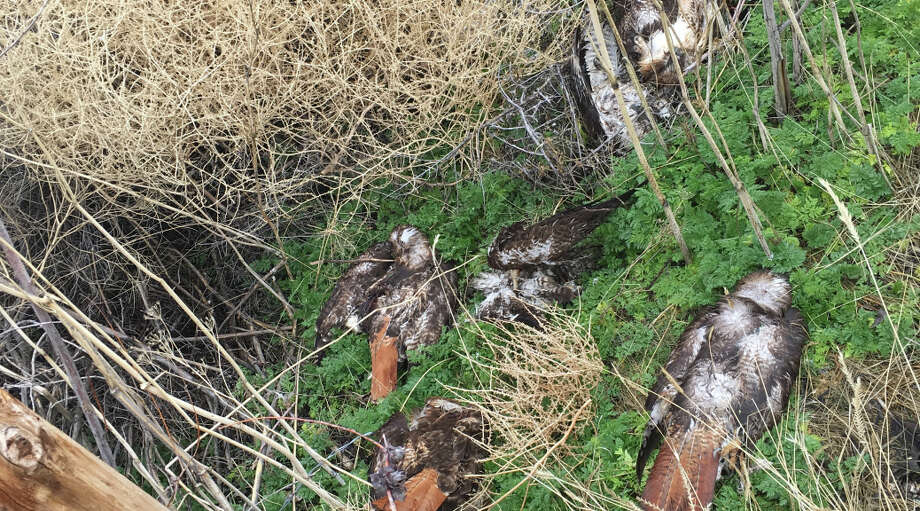 The property was allegedly found littered with bird carcasses. Photo: California Department Of Fish And Wildlife