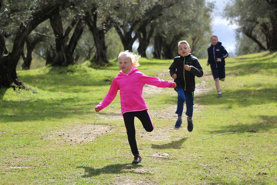 "With their ""backyard"" a 2,000-tree olive grove in the hills east of Oroville, the children of Jamie and Nicole Johansson of Lodestar Farms, home to a buttery-flavored olive oil, have plenty of room to play. Photo: Harriot Manley, Special To The Chronicle"