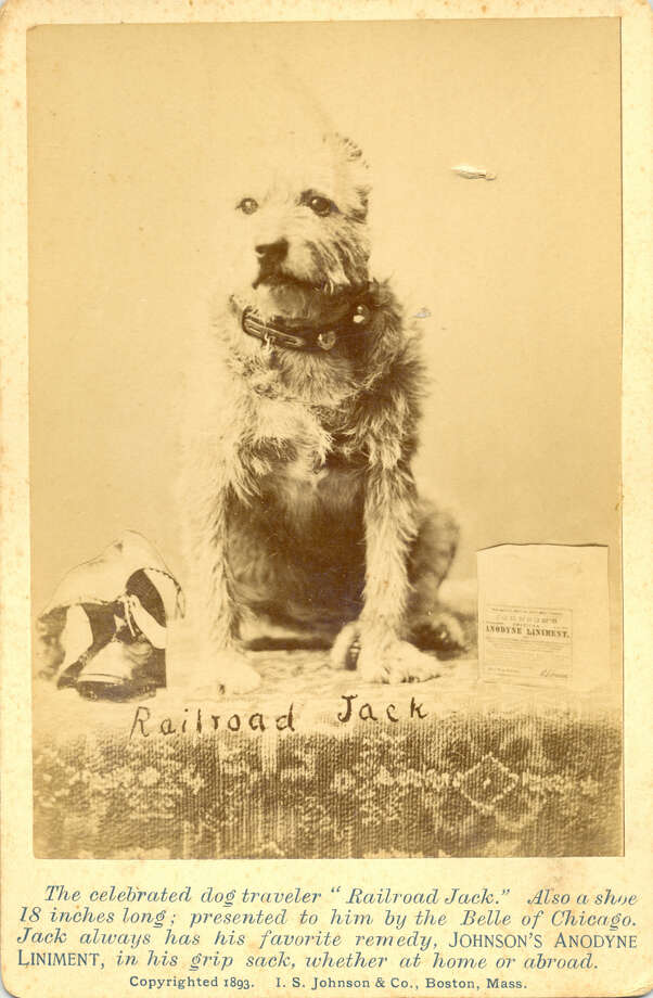 Railroad Jack, an Albany dog that became internationally famous for his habit of hopping trains, was so well known that he was used in advertisements, including for this liniment from a Boston company. (Photo courtesy Kelli Huggins.)