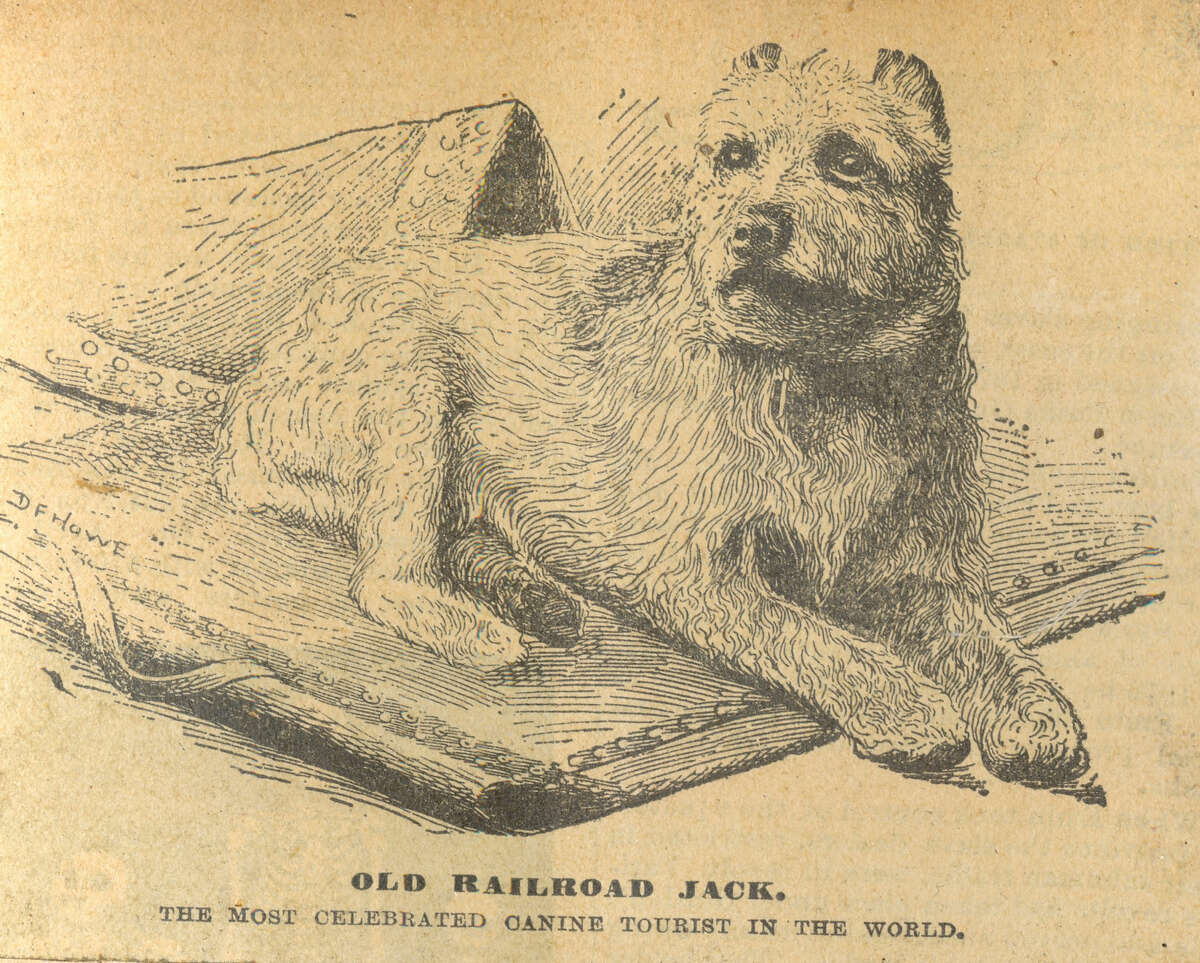 A circa-1890s postcard of Albany-based dog Railroad Jack describes him as