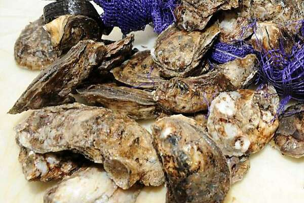 The Fairfield Shellfish Commission voted Wednesday to prohibit the recreational harvesting of oysters from April 1 to Sept. 29.