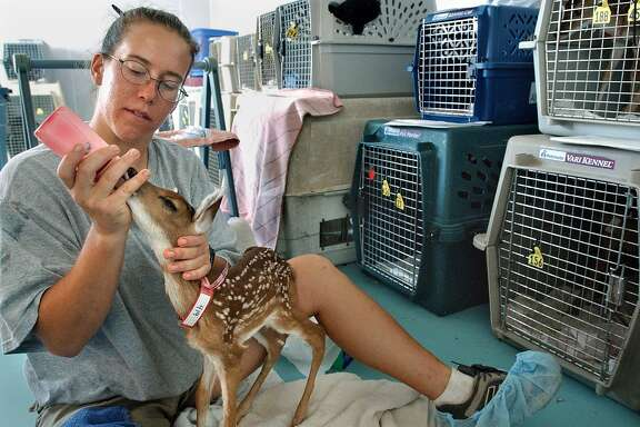 Unless a fawn is actually injured, leave it alone. Mothers don't spend all day with their infants, so just because you don't see mom doesn't mean the fawn is orphaned.