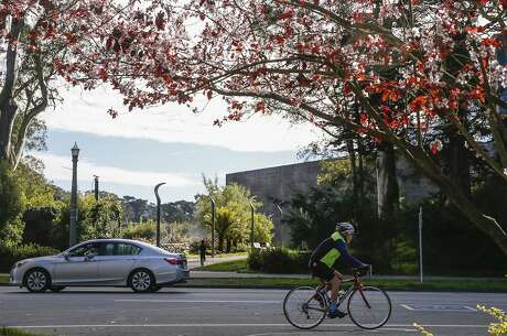 A person cycles past two cherry blossom trees along John F. Kennedy Drive in Golden Gate Park Wednesday, Feb. 14, 2018 in San Francisco, Calif. Photo: Jessica Christian / The Chronicle
