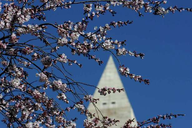Cherry blossoms are set to peak in March 27-31 in Washington, D.C.'s Tidal Basin.