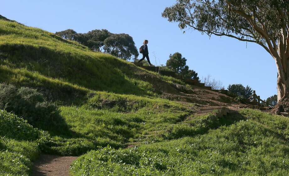 The trail at Billy Goat Hill boasts lush greenery. Photo: Liz Hafalia, The Chronicle