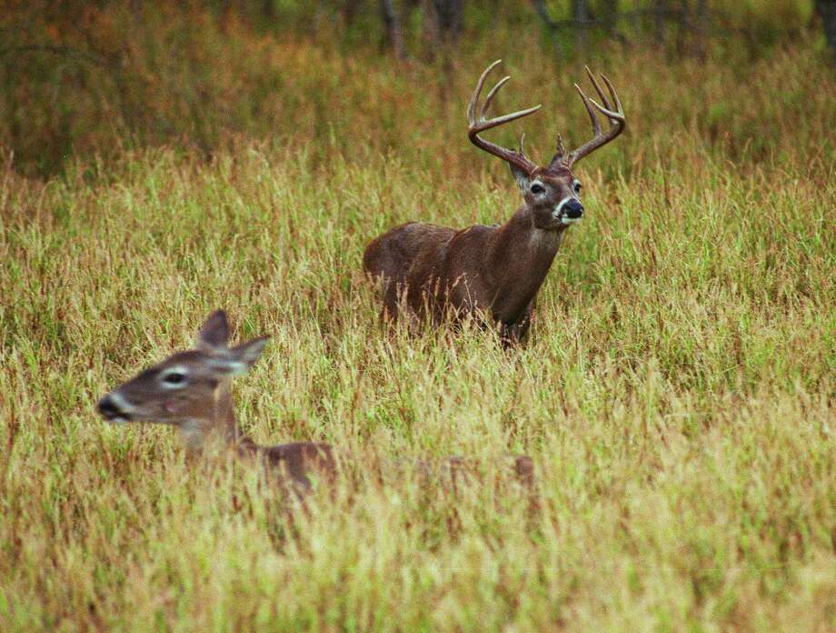 New York state lawmakers this week approved legislation that would reduce the threshold for being guilty of hunting while intoxicated. Photo: Shannon Tompkins / Houston Chronicle