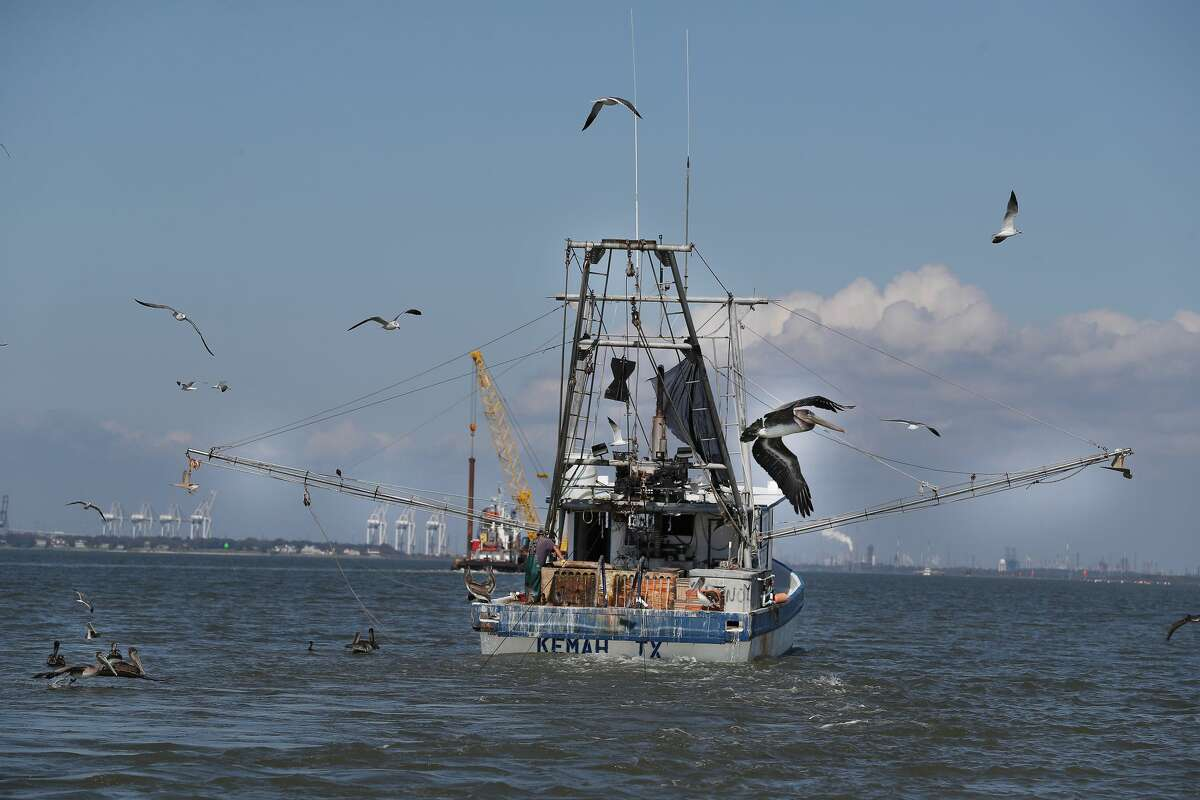 After Hurricane Harvey, Galveston Bay dolphins turned up malnourished and covered with skin lesions, which researchers believe is related to the inundation of freshwater into the bay after Hurricane Harvey. Some studies show that these skin conditions can be the result of pollution. Shrimpers are pictured on the water in Seabrook.