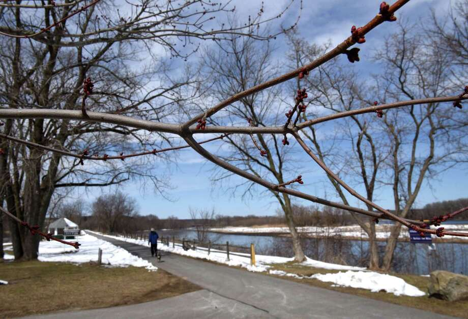 A tree begins to bud in Lions Park on Tuesday, March 20, 2018, in Niskayuna, N.Y. (Will Waldron/Times Union) Photo: Will Waldron, Albany Times Union