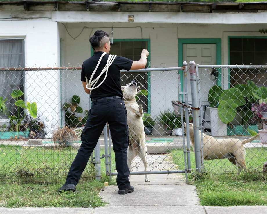 Chain link fences are easy for dogs to climb, leading to yard escapes. Photo: Bob Owen /San Antonio Express-News / San Antonio Express-News