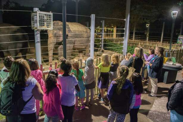 Campers watch the elephants eat during an overnight camping session at the Houston Zoo.