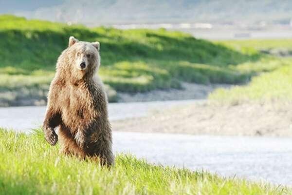 Travelzoo Bear Alaska