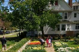 Colorblends House & Spring Garden in Bridgeport will be open to the public March 31 through May 14. The garden will be open dawn to dusk free of charge.