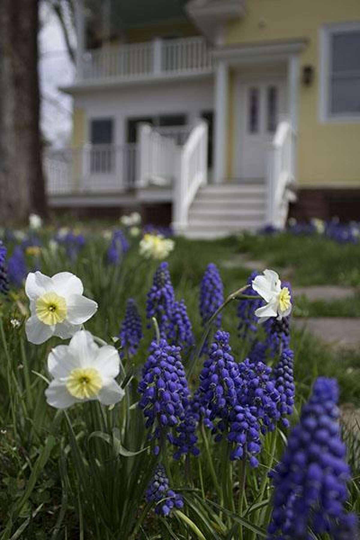 Colorblends House & Spring Garden in Bridgeport will be open to the public Saturday through May 14. The garden will be open dawn to dusk free of charge. Find out more.