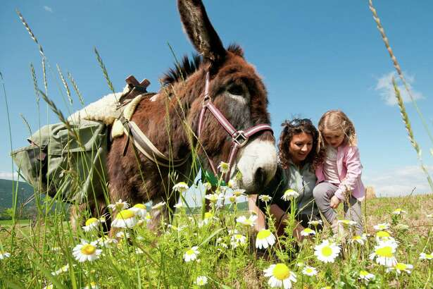 """Family Walking Holidays with a Donkey in France,"" offered by Responsible Travel, is a weeklong trip is spent in the company of a friendly donkey, who will set a casual pace as you make your way along the Rhône Valley."