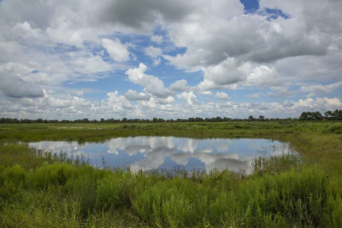 A wetland at the Indiangrass Preserve.