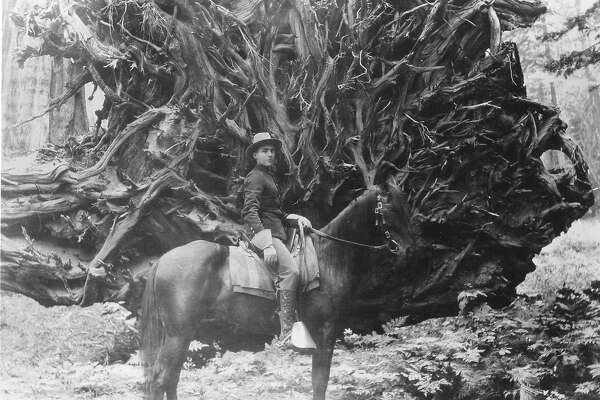 Cavalry trooper of the U.S. Army at the base of the fallen Elephant's Foot Tree in the Mariposa Grove of Yosemite national Park,  Photo dates from around 1900    Photo courtesy of the National Park Service Handout  No credit