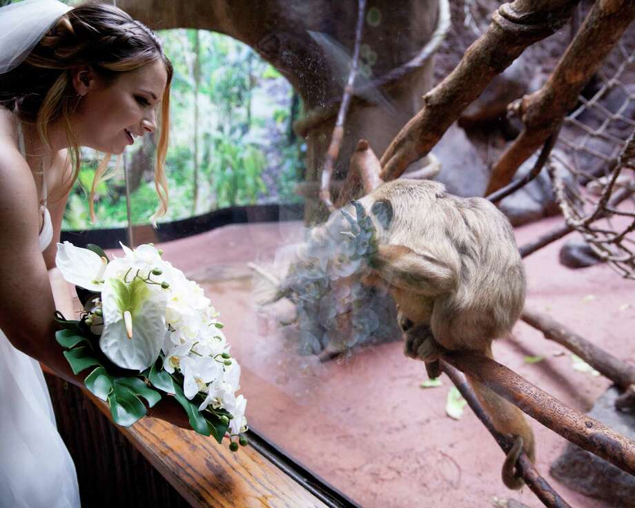 """Jennifer Merenda discovers that her wedding attire and bouquet has caught the attention of a howler monkey at the Connecticut's Beardsley Zoo in Bridgeport. Merenda, who is Bridgeport's animal control officer, selected the venue to avoid a """"cookie-cutter"""" wedding. Photo: Zack Wussow / Contributed Photo / Zack Wussow Media"""