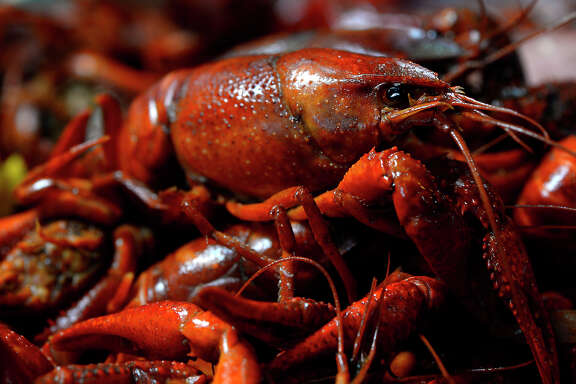 Crawfish are the main attraction Saturday at the CrawPHish Festival in The Woodlands.