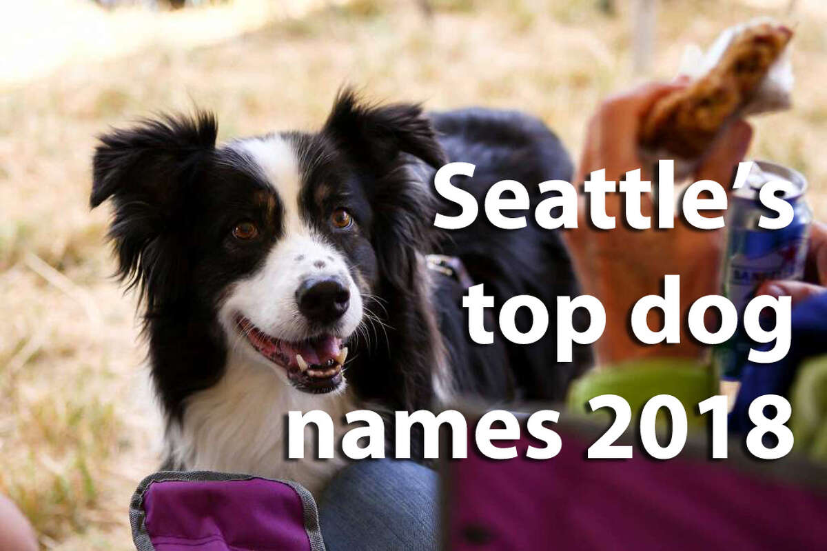 What are the most popular names humans have named doggos in Seattle? We dived into Seattle Animal Shelter licensing data to find out. Is your pooch's name on this list?