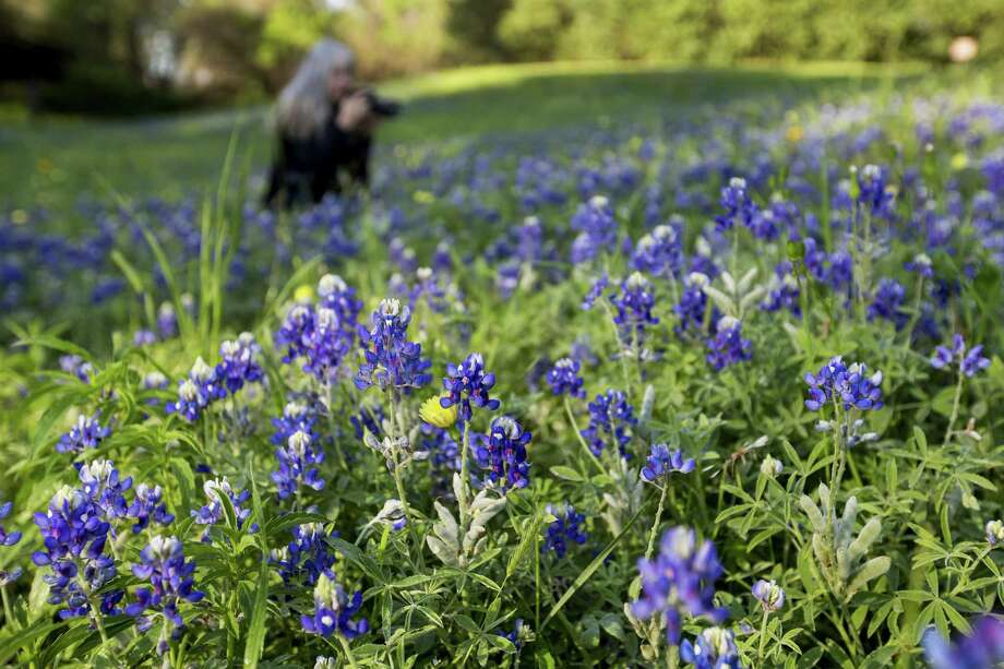 Theresa DiMenno photographs bluebonnets in Terry Hershey Park on Thursday, March 22, 2018, in Houston. ( Brett Coomer / Houston Chronicle ) Photo: Brett Coomer, Staff / Houston Chronicle / © 2018 Houston Chronicle