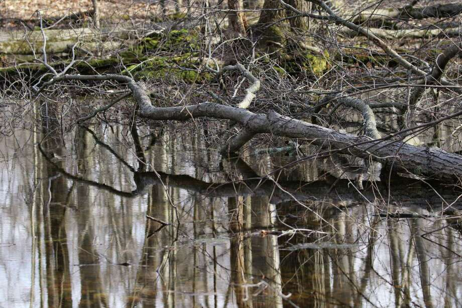 A typical vernal pool in Greenwich. Photo: Contributed Photo Denise Savageau / Contributed / Greenwich Time Contributed