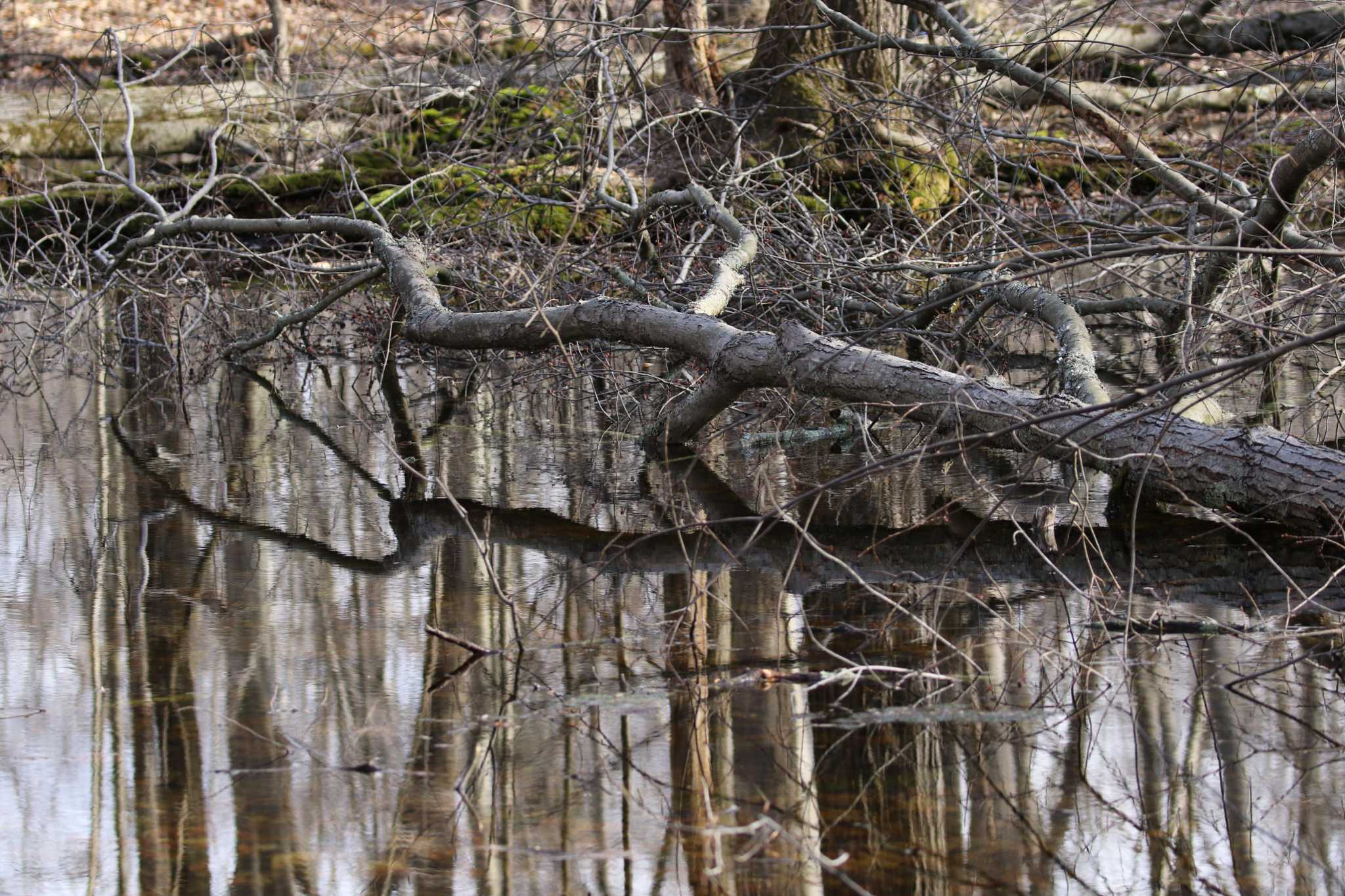 Greenwich Tree Conservancy welcomes spring with vernal pond tour | Greenwich Time