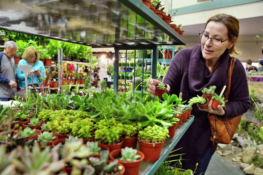 Linda Hill of Glens Falls picks out some succulents at the Capital District Garden & Flower Show marketplace at HVCC Friday March 23, 2018 in Troy, NY.  (John Carl D'Annibale/Times Union) Photo: John Carl D'Annibale / 20043258A