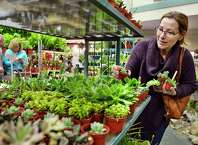 Linda Hill of Glens Falls picks out some succulents at the Capital District Garden & Flower Show marketplace at HVCC Friday March 23, 2018 in Troy, NY.  (John Carl D'Annibale/Times Union)