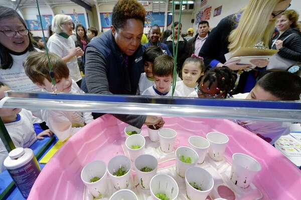 "Judge and Conncan community organizer Toni Williams looks over the Columbus School First grade project, Lettuce Eat Produce, during the citywide STEM Expo Saturday, March 24, 2018, at Brien McMahon High School in Norwalk, Conn. The second annual citywide event, which is themed ""Innovation,"" focused on the ability of students to think, question, design, create, struggle, collaborate, try, solve,  invent, reflect and learn."