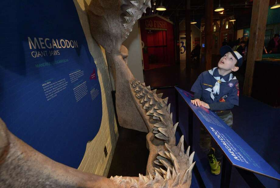 Cub Scout John Frisbee of Pack 17 in Wilton checks out the Megalodon teeth during Scout Day at The Maritime Aquarium Saturday, March 24, 2018, in Norwalk, Conn. Scout Day offers admission discounts, plus special educational programs that help to fulfill badge requirements, as well as other educational opportunities for Girl Scouts and Boy Scouts. Photo: Erik Trautmann / Hearst Connecticut Media / Norwalk Hour