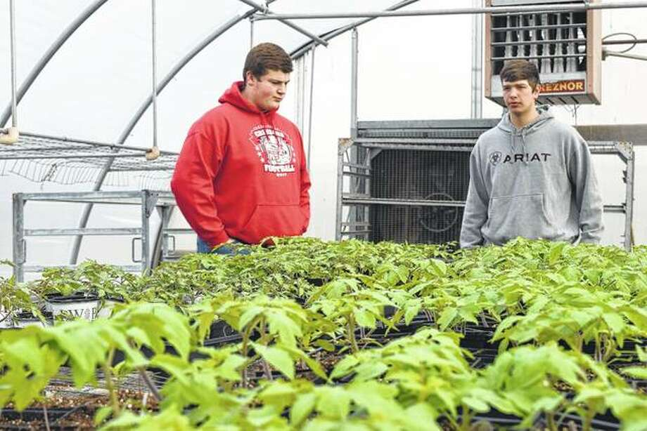 Jacksonville FFA members Austin Dufelmeier (left) and Chase Tomhave look over the FFA plant-growing project at the Jacksonville High School greenhouse.
