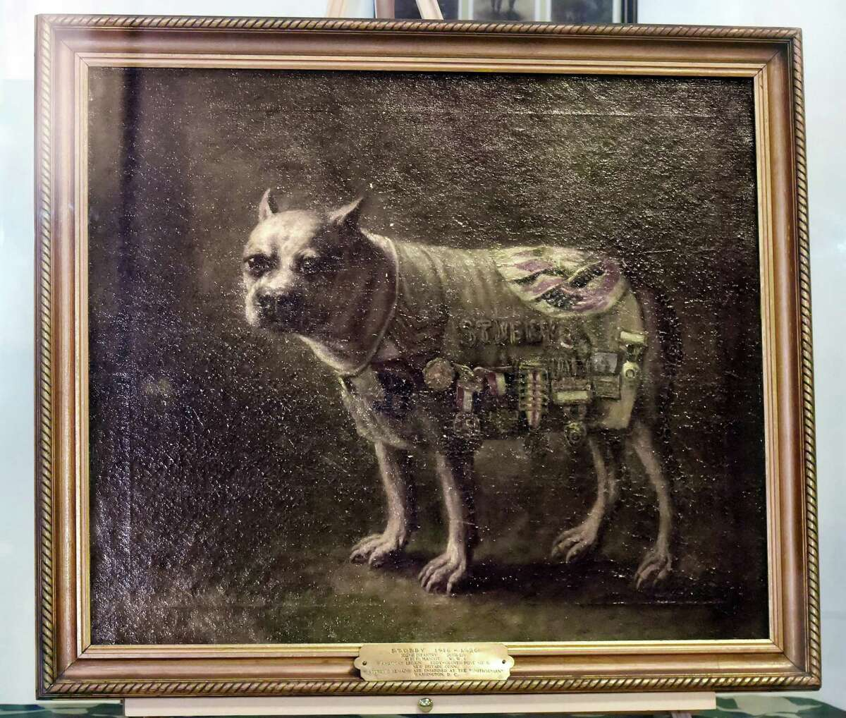 A portrait of the canine war hero, Sgt. Stubby, painted in 1926 by Charles Ayer Whipple on exhibit at the West Haven Veterans Museum & Learning Center.