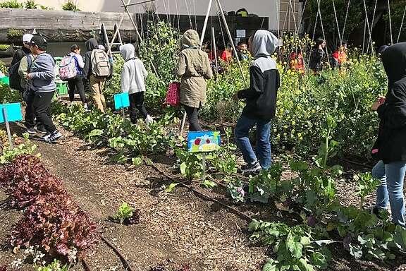 Bessie Carmichael School third- and fourth-graders at Tenderloin Community Garden