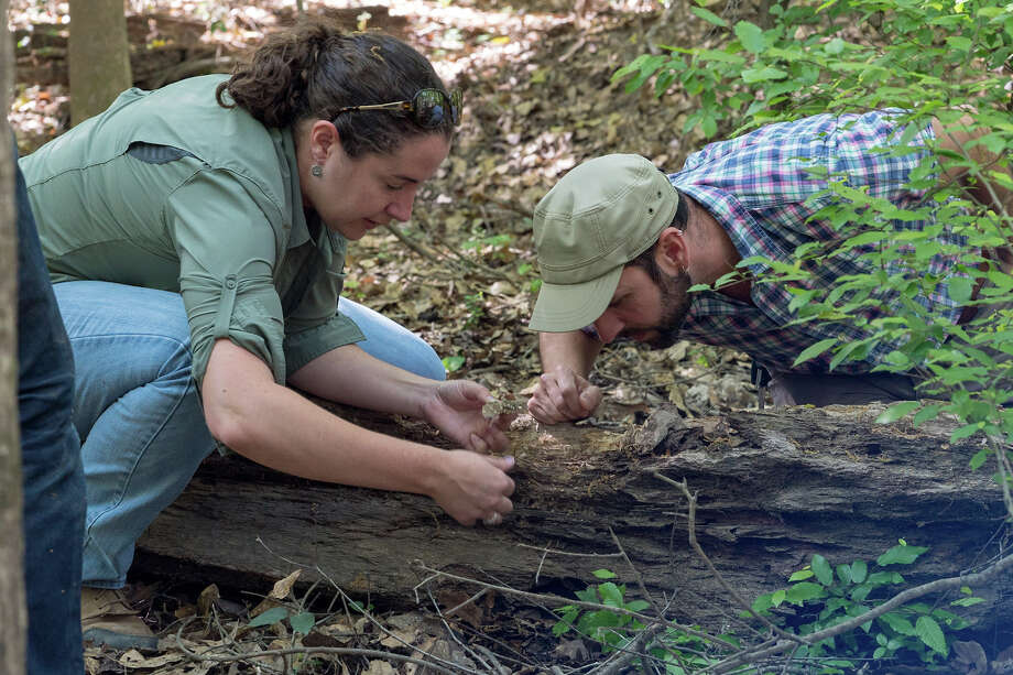 Rice University ecologists Sarah Bengston and Tom Miller examine ants at Big Thicket National Preserve near Beaumont.>>> Click through to see other dangerous creatures that come out after big floods in Houston Photo: Brandon Martin / Rice University