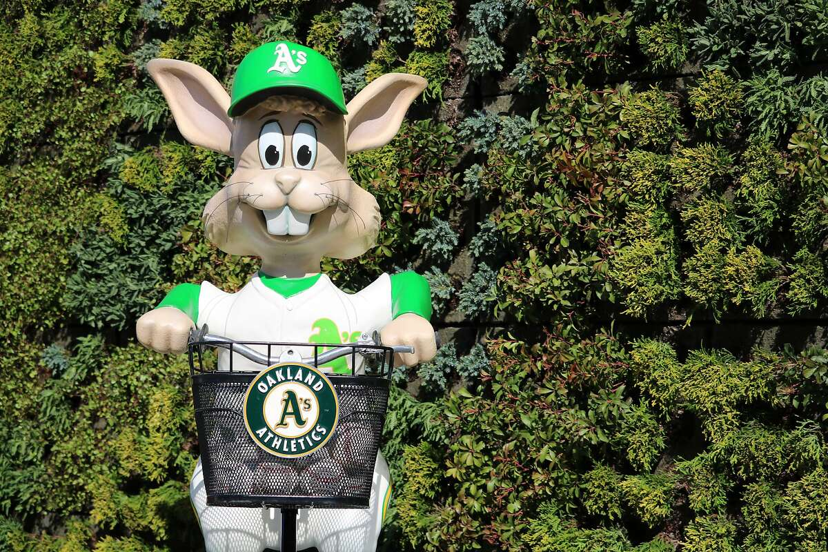 Harvey the Rabbit, brought back for the A's 50th anniversary in Oakland, will debut Friday night at the Coliseum.