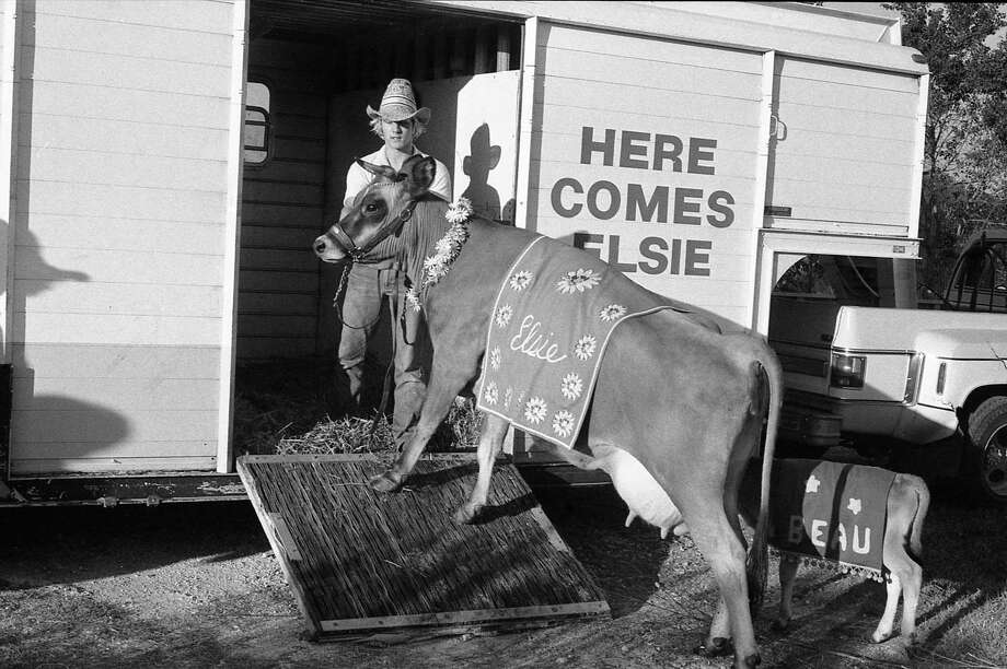 Borden's advertising star Elsie the cow and Beauregard are loaded onto the Borden trailer for travel in 1981. Photo: File Photo / Houston Chronicle / Houston Chronicle