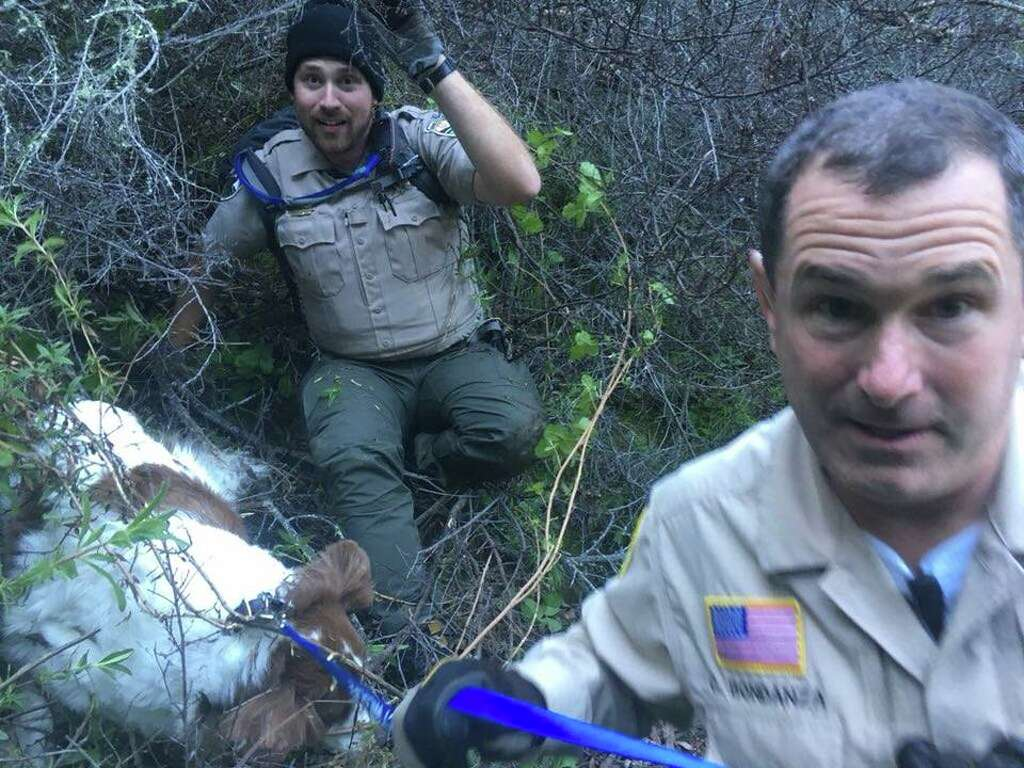 Law Enforcement And Rescue Agencies In Marin County Collaborated To Save Gracie A Lost Dog