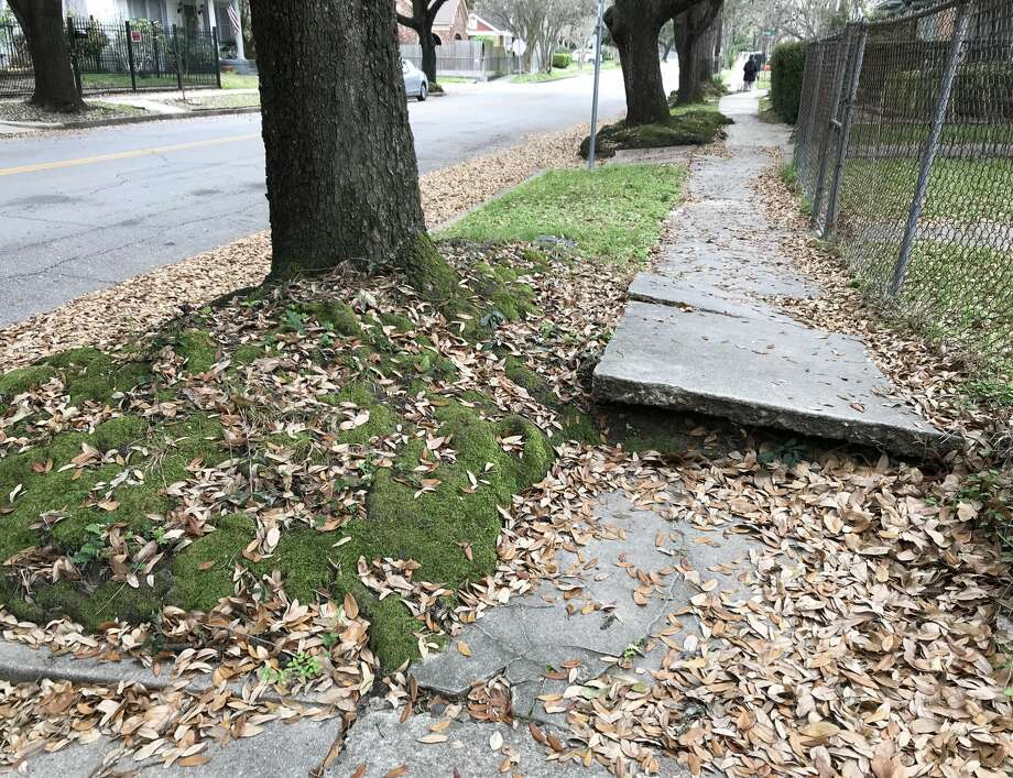 Houston's sidewalks are in notoriously bad shape. In this photo: A volcanic sidewalk formation in Woodland Heights. Photo: Allyn West