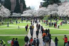 Thousands enjoy the blossoming Yoshino cherry trees on the UW quad, March, 19, 2018.