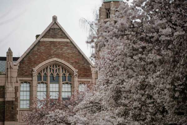 University of Washington's brick buildings frame the Quad's famed cherry blossoms on Friday, March 23, 2018.