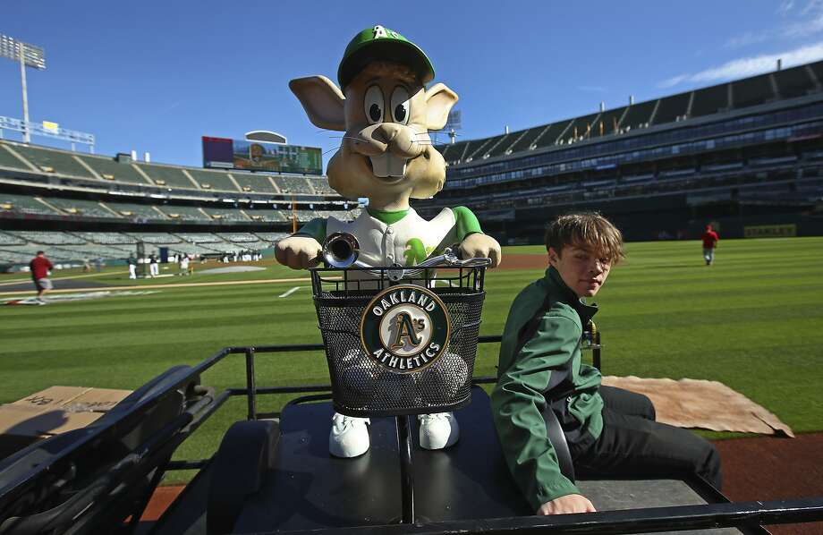 """Oakland Athletics' mascot Harvey the Rabbit arrives on the field of the Oakland Coliseum on a cart prior to a baseball game against the Los Angeles Angels on Thursday, March 29, 2018, in Oakland, Calif. Harvey was brought back for the 50th anniversary season of the A's, one of former owner Charlie Finley's many colorful marketing ideas. First in Kansas City and then in the early days of the team's time in Oakland, the mechanical animal popped up from the ground behind home plate and delivered balls at the press of a pedal, accompanied by """"Here Comes Peter Cottontail."""" (AP Photo/Ben Margot) Photo: Ben Margot / Associated Press"""