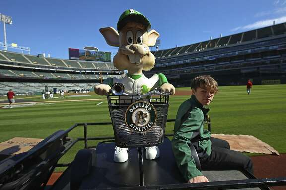 """Oakland Athletics' mascot Harvey the Rabbit arrives on the field of the Oakland Coliseum on a cart prior to a baseball game against the Los Angeles Angels on Thursday, March 29, 2018, in Oakland, Calif. Harvey was brought back for the 50th anniversary season of the A's, one of former owner Charlie Finley's many colorful marketing ideas. First in Kansas City and then in the early days of the team's time in Oakland, the mechanical animal popped up from the ground behind home plate and delivered balls at the press of a pedal, accompanied by """"Here Comes Peter Cottontail."""" (AP Photo/Ben Margot)"""