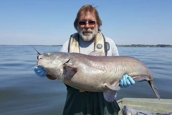 Carl Bignali of the Texas Parks and Wildlife's Inland Fisheries Management holds a 42-inch blue catfish caught during a March survey on Lake Conroe. Bignali estimated the fish weighs 30-40 pounds. But, the team caught an even bigger catfish in 2016...